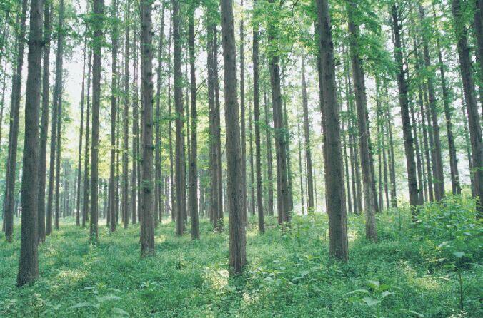 日照海滨国家森林公园-图片