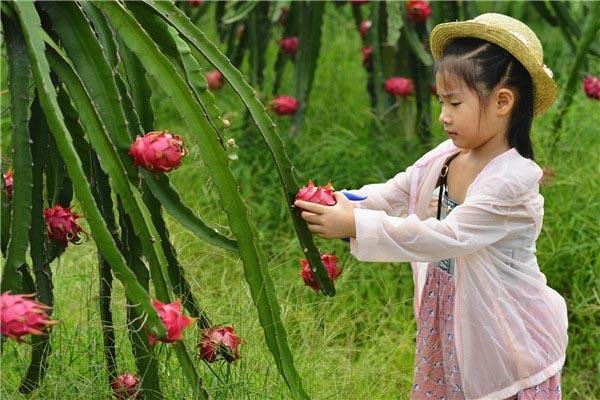 都乐农庄四季采摘园-图片